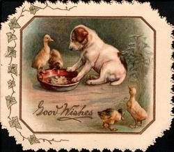 GOOD WISHES in gilt lower front puppy sits with paws in bowl watching ducklings