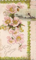 KINDLY GREETINGS below  wild roses & rural inset  on left flap with evergreen border
