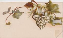 no front title, scanty ivy leaves,white flowers above perforated gilt leaf shaped design