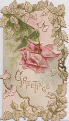 GREETINGS in gilt below pink rose drooping  down, foliage round card (C)