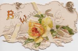 BEST WISHES above white & orange rose