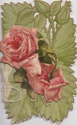 GOOD WISHES FOR A ROSY CENTURY two red & pink roses applique in front of perforated design & buds on green background