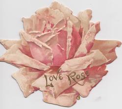 LOVE ROSE in gilt at base of pink rose