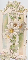 no front title, white daisies & stylised ivy  in front of perforated panel design, embossed