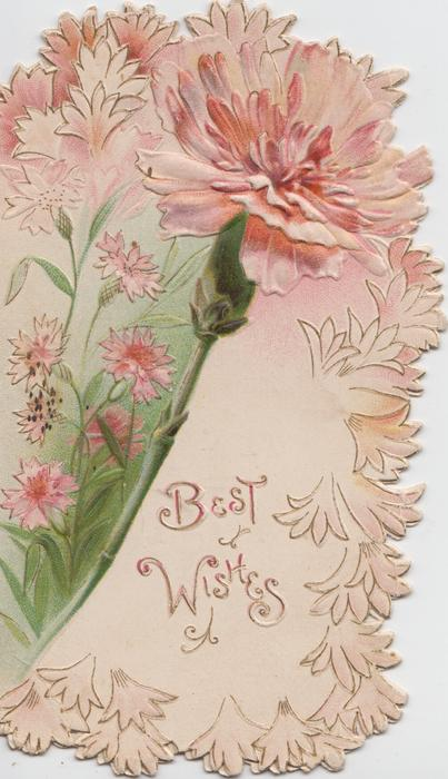 BEST WISHES in gilt below pink carnations, stylised flowers around