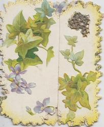 no front title, ivy leaves, stylised ivy leaves,violets (some glittered), ivy & violets on both flaps