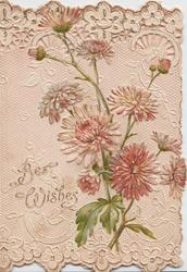 BEST WISHES in gilt, purple & pink chrysanthemums on cream designed & embossed perforated front