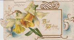 BEST WISHES (B & W illuminated) on white inset yellow daffodils left, gilt & white design, embossed