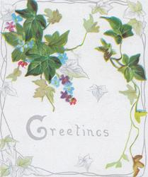GREETINGS below ivy leaves, forget-me-nots behind