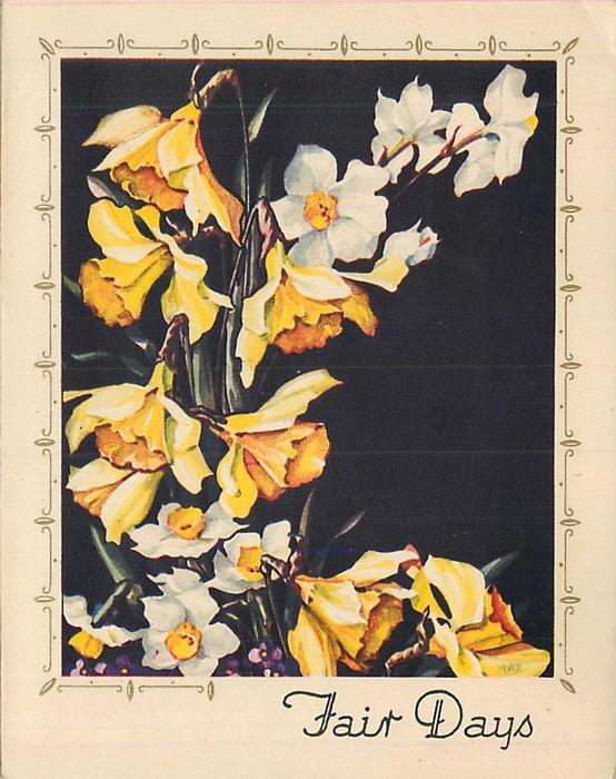 FAIR DAYS yellow & white daffodils, black background