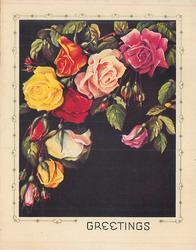 GREETINGS roses of many colours & buds hang from top border, black background