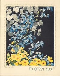 TO GREET  YOU forget-me-nots & yellow primulas, black background
