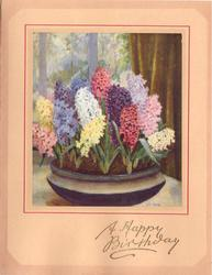 A HAPPY BIRTHDAY opt. in gilt, many colours of hyacinths in wide blue & white pot, tan borders with pink accent