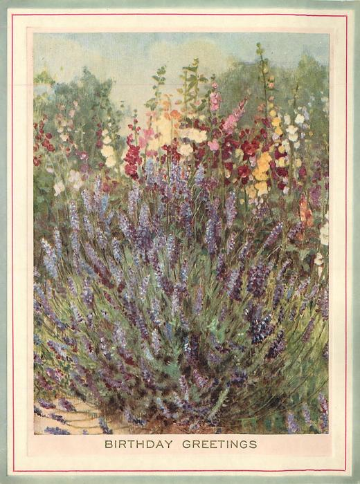 BIRTHDAY GREETINGS in gilt, close view of lavender, tall multi-coloured flowers behind