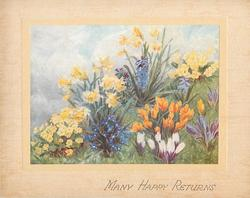 MANY HAPPY RETURNS grassy patch with flowers: primula, crocus, hyacinth & daffodil
