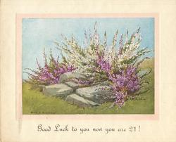 GOOD LUCK TO YOU NOW YOU ARE 21! purple & white heather amongst 4 large rocks, grass & blue sky