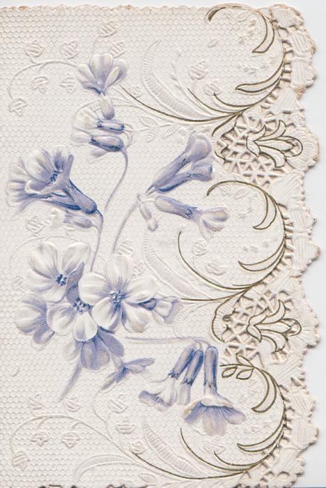 no front title, bluebells left on designed perforated white front