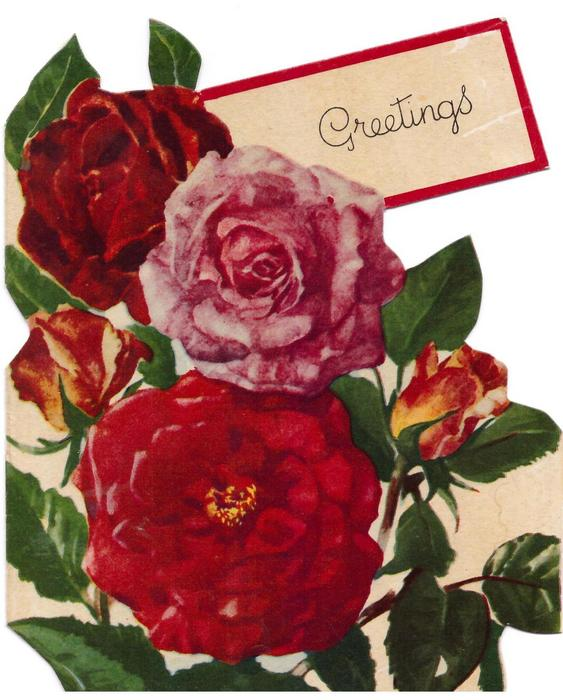 GREETINGS on tag with red border, 3 red & pink roses & two buds, die-cut borders