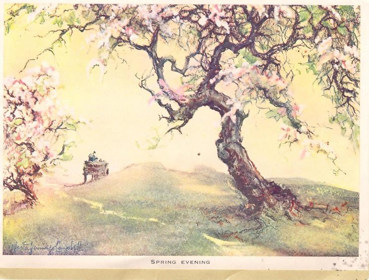 SPRING EVENING cherry blossom trees divided by narrow path, in distance man rides away in cart