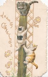 LOVING GREETINGS in gilt, two kittens climbing a pole towards another grey kitten sitting on top, trellis background behind