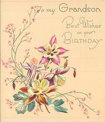 BEST WISHES ON YOUR BIRTHDAY TO MY GRANDSON 4 pink & white columbine, silver leaves & pink floral sprays