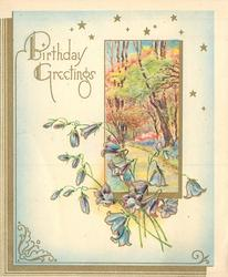 BIRTHDAY GREETINGS blue bells overlap rural inset of tree lined path, gilt margin left & small gilt stars above