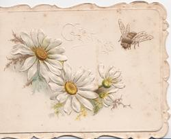 GREETINGS in white above white daisies with yellow centres & bee