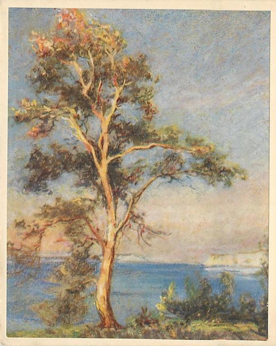 no front title -- arbutus tree at waterfront, cream borders