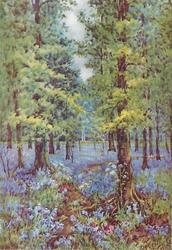 no front title -- woodland scene with ground covered in purple flowers