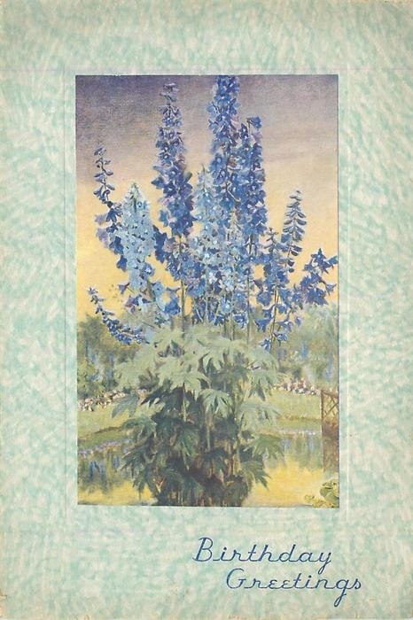 BIRTHDAY GREETINGS in blue, delphinium plant, flowers & leaves, purple & yellow sky in background