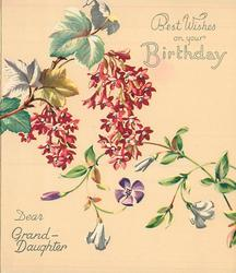 BEST WISHES ON YOUR BIRTHDAY -- DEAR GRAND-DAUGHTER  flowering currant & vine with purple & white flowers