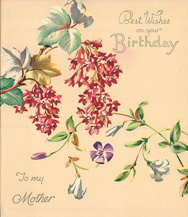 BEST WISHES ON YOUR BIRTHDAY -- TO MY MOTHER  flowering currant & vine with purple and white flowers