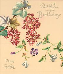 BEST WISHES ON YOUR BIRTHDAY -- TO MY WIFE  flowering currant & vine with purple and white flowers