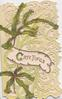 GREETINGS (G illuminated)  in gilt on white inset among orchid cactus leaves, heavily perforated green background