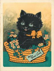 FOR GOOD LUCK on tag attached to orange basket filled with stylised flowers and black cat wearing an orange bow