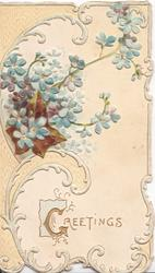 GREETINGS(G illuminated) in gilt below design & blue forget-me-nots