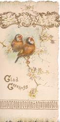GLAD GREETINGS(G & G illuminated) two finches perched on blossom tree under gilt bordered floral top design