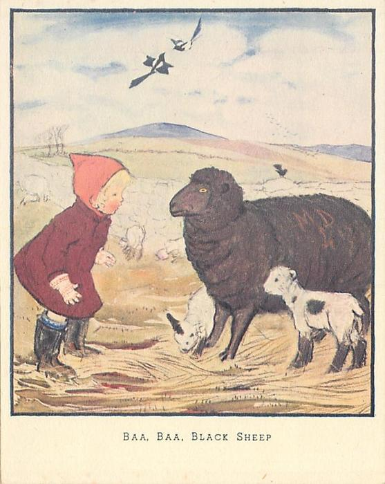 BAA, BAA, BLACK SHEEP girl in red jacket looks closely at large black sheep