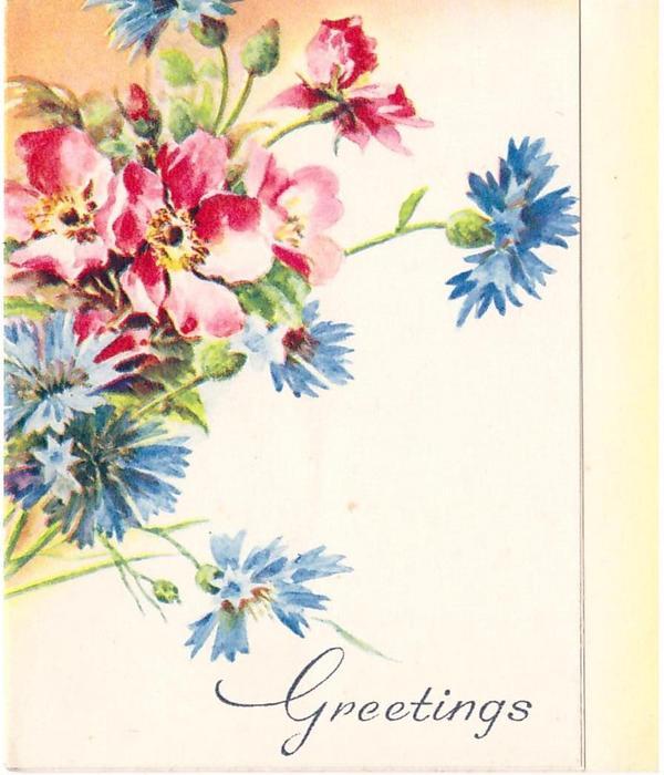 GREETINGS below blue cornflowers & rock (wild) roses