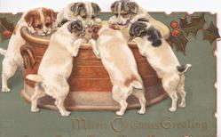 MERRIE CHRISTMAS GREETING in gilt, 6 puppies eat at enormous dish, stylised holly, deep green background