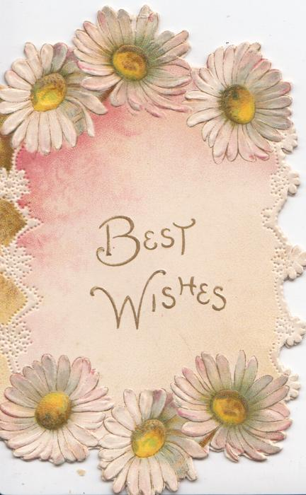 BEST WISHES in gilt centre, white daisies  with yellow centres left & around, white marginal design