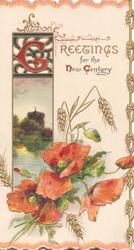 GREETINGS FOR THE NEW CENTURY(G,N &C illuminated) poppies & barley below watery rural inset, marginal barley design