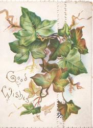 GOOD WISHES in gilt below left ivy leaves across both flaps