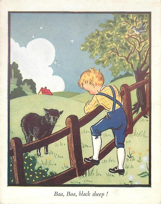 BAA, BAA, BLACK SHEEP! boy, faces away, leans on wooden fence, looking at single black sheep