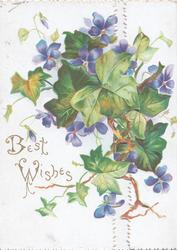 BEST WISHES in gilt,  violets & ivy leaves across both flaps