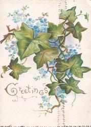 GREETINGS in gilt below, forget-me-nots & ivy