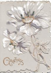 GREETINGS in gilt below, grey background, glittered study in grey & white of 2 anemones