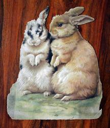 FAVOURITES two bunnies sitting up