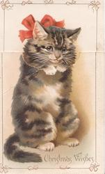 CHRISTMAS WISHES cat sits begging when flap is closed, but in red stocking when closed, red ribbon