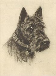 head & shoulders of black Scottish terrier, facing part right